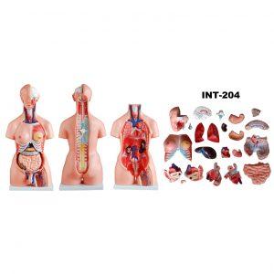 Aнатомические 3D-модели, тренажеры и симуляторы