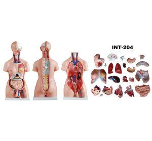 Aнатомические 3D-модели (Китай)