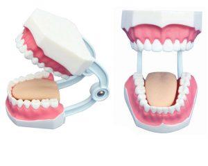 Модели зубов