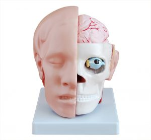 Модели головы