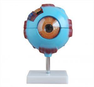 Модели глаз